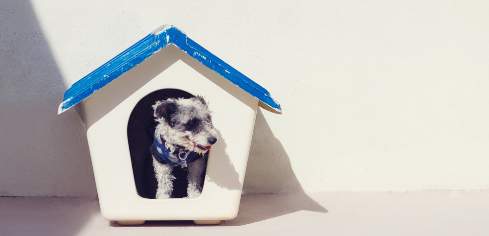 Small dog in a dog house at the dog sitter